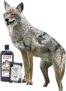 Coyote PeeCoy Combo for Geese, Turkeys & Birds